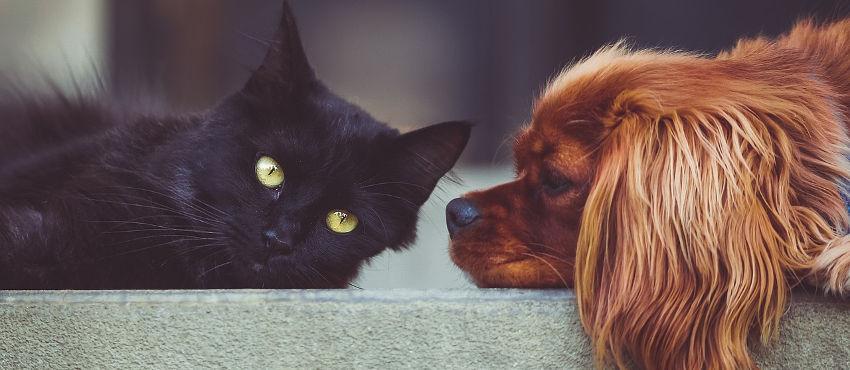 Cura e accudimento degli animali