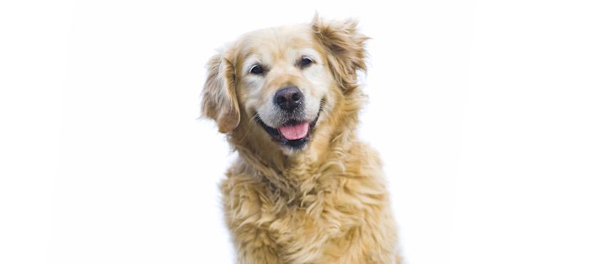 Quando il nostro cane diventa anziano